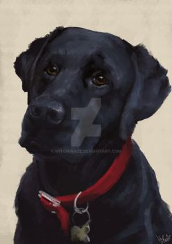 Black Lab by Witch-Haze