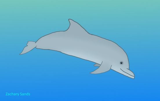 Dolphin Drawing Finished by Infiniteatom