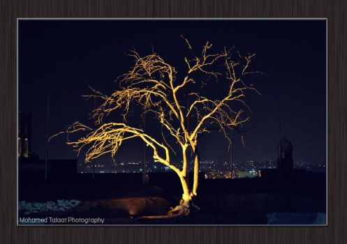 Tree by MohamedTalaat