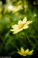 Nature Shots 7 by dargor1406