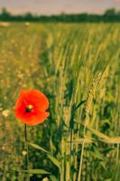 Red and Green by Artursphoto