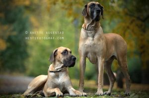 Grobian And Tyson by Hestefotograf
