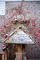 First Snowfall of the Year by confucius-zero