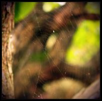 Walking Into Spiderwebs by ravenheartmetal