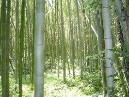 Bamboo Forest by NocturnalHouse