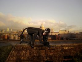What you can see on a roof in London by RavensLane