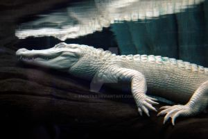 Albino Crocodilian by xhostile