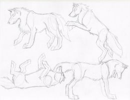Wolf Poses 2 by DrawingMaster1