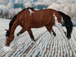 CUC The Perfect Storm by CubanacanWarmbloods