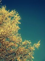 Yellow Tree with snow by sunbeamy