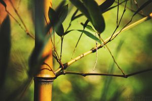 Bamboo by AljoschaThielen