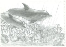 Dolphin Sketch by Spudfuzz
