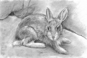 Baby rabbit by Wenchkin