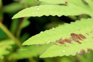 Water Droplets by ArianeCreations