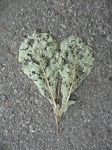 Stock: Heart Shaped Leaf I by frameofthoughts