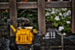 Wall-e in the garden by Sprunks
