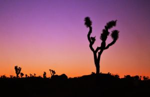 Joshua Tree Sunrise by aquarius-galuxy