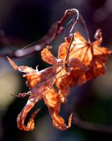 Dead Leaves. by ch3shirecat