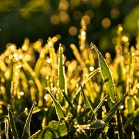golden dew by SaphoPhotographics