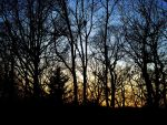 Trees at Sunset by Duffy01