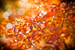 autumn leaves 2010 001 by moitisse