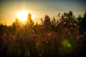 Flowers and sunset by Uncle-Paul