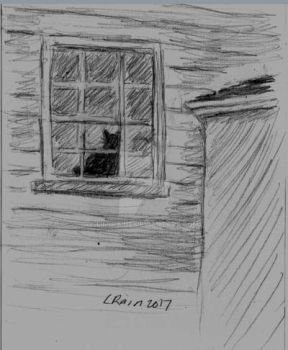 Kitty in the Window by LilyRaine