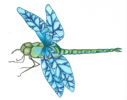 dragonfly by christymay26
