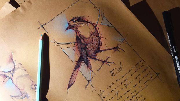 Bird Sketch Psdelux by psdeluxe