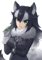 gray wolf by amy30535