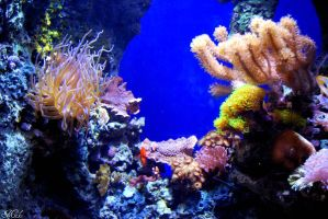 Sea Life 11 by Poet515