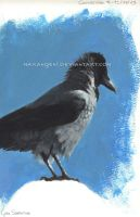 Hooded crow acrylic by makangeni