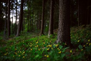 the yellow spotted forest by mescamesh