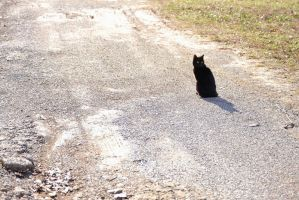 Cat on a Road by KStyer