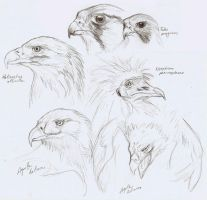 Birds of Prey - doodles by Nachiii
