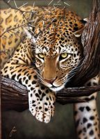 African leopard by DISCOFRISCO