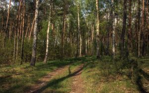 Yet another forest trail 1 by Isyala