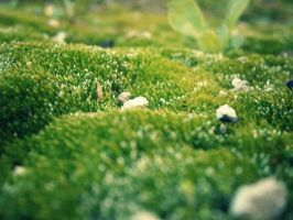 Micro forest by Lola22