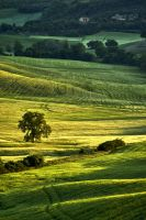 Val d'Orcia 8 by CitizenFresh