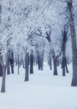 Hoar Frost Forest by midnightstouchSTOCK
