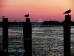Birds At Sunset by solonotes