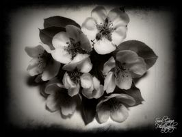 Pear Blossoms by GothicAmethyst