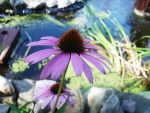 Flowers and pond by doggil67