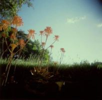 holga-2 by stephanielok