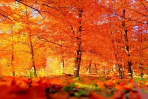 Autumn foliage by stefeli-reloaded