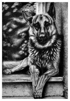 German Shepherd by Verenique