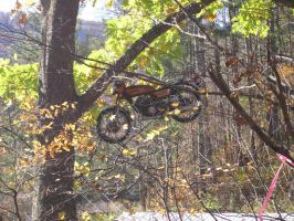 Motorcycle in a Tree by W-D-F-A
