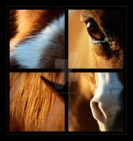 Chestnut Horse Collage by rainyrose23