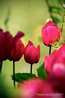 Wild tulips by geeson
