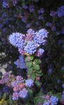 Flowers2 by Alice-Coal